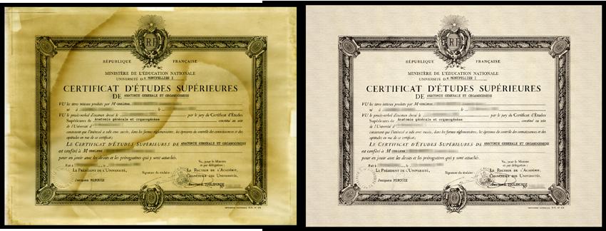 Restauration de document for Diplome restauration collective